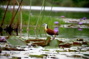 Lake Chahafi Resort, Zelt-Lodges  Kisoro - big - 84