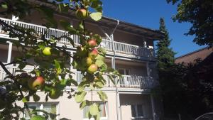 obrázek - Apartment Hofer