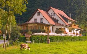 Gasthaus - Pension Hohberg - Kutt