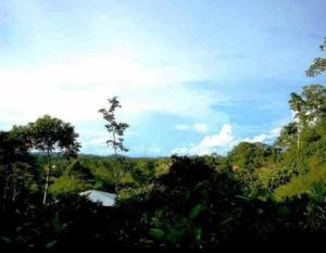 Huella Verde Rainforest Lodge, Chaty v prírode  Canelos - big - 22