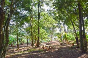 Pousada Flores do Campo, Guest houses  Águas de Lindóia - big - 86