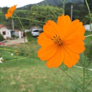 Pousada Flores do Campo, Pensionen  Águas de Lindóia - big - 15