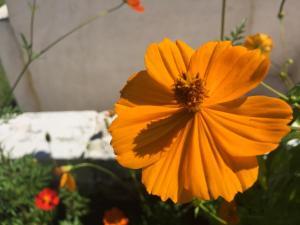 Pousada Flores do Campo, Pensionen  Águas de Lindóia - big - 72