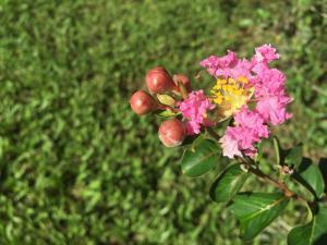 Pousada Flores do Campo, Pensionen  Águas de Lindóia - big - 71