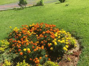 Pousada Flores do Campo, Pensionen  Águas de Lindóia - big - 58