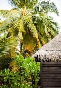 Outrigger Konotta Maldives Resort (16 of 85)