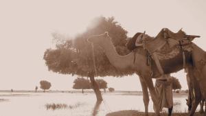 Arya Haveli, Hotely  Jaisalmer - big - 33