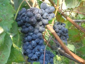 Gli Ulivi Agriturismo, Agriturismi  Sant'Agnello - big - 80