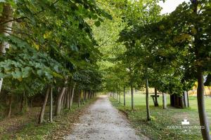Parque dos Monges, Zelt-Lodges  Alcobaça - big - 13