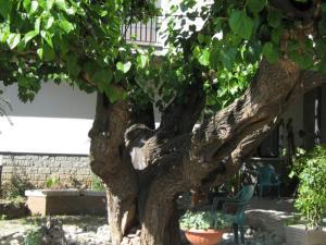 Hotel da Rosanna - Civitella d'Agliano