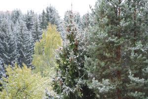 Lesnye Dali - Baranovo