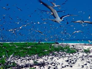 Bird Island (8 of 24)
