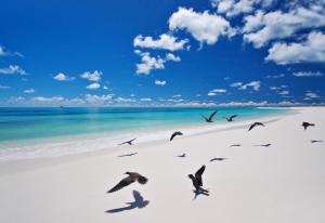 Bird Island (5 of 24)