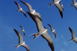Bird Island (13 of 24)