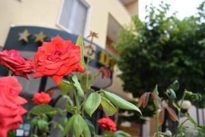 Eco-Hotel Edy - AbcAlberghi.com