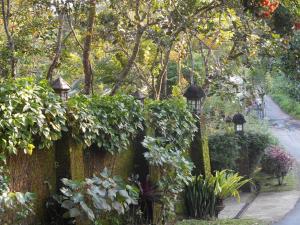 Mi Casa Ijen Guest House, Guest houses  Licin - big - 183