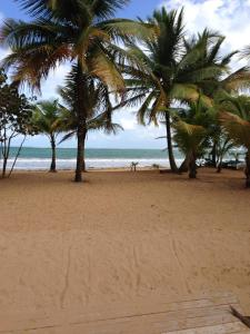 Beach Front Apartment Rio Mar Puerto Rico