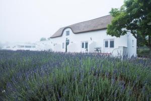 Klein Waterval Riverside Lodge, Guest houses  Franschhoek - big - 60
