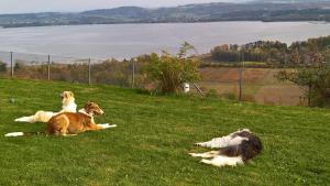 Swiss Borzoi House, Bed and Breakfasts  Bellerive - big - 42