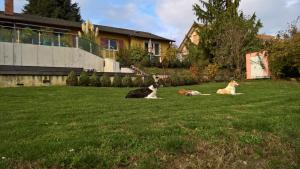 Swiss Borzoi House, Bed and Breakfasts  Bellerive - big - 37