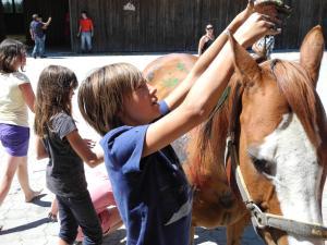 Espi-Stables Ferienhof Esterhammer, Farm stays  Liebenau - big - 17