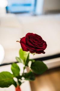 Hostel pod Różą