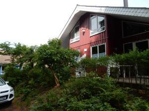 Eichhörnchen I - Friedrichswald