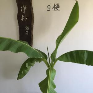 Jing Pu Plant Theme Hostel, Hostely  Jinghong - big - 74