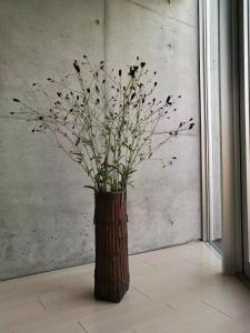 Jing Pu Plant Theme Hostel, Hostely  Jinghong - big - 52