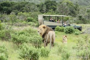 Sibuya Game Reserve and Lodge, Resort  Kenton on Sea - big - 76