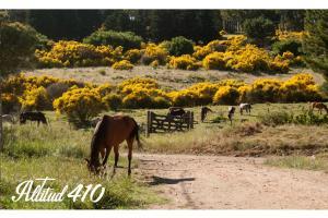 Altitud 410, Gasthäuser  Villa Ventana - big - 72