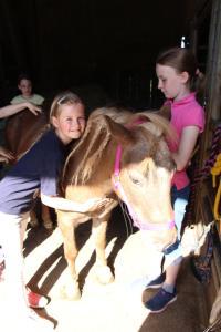 obrázek - Pony-und Ferienhof Gut Habbecke