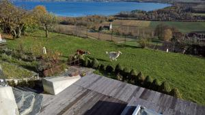Swiss Borzoi House, Bed & Breakfast  Bellerive - big - 28