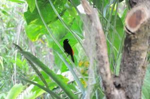 Talamanca Reserve, Отели  Rivas - big - 60