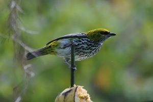 Talamanca Reserve, Отели  Rivas - big - 58