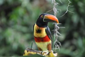Talamanca Reserve, Отели  Rivas - big - 56
