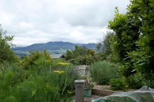 Highgate Bed and Breakfast - Accommodation - Pirongia