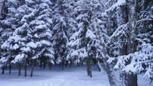 Forest Club Lyutoretskoye - Merleyevo