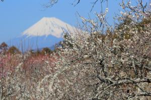 Shuzenji Onsen Hotel Takitei - Accommodation - Izu