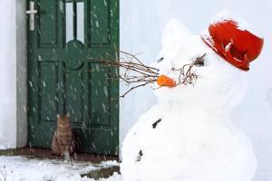 Gospodarstwo Agroturystyczne Zielony Kot