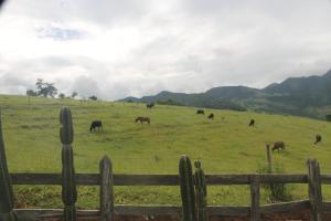 Fazenda Serra Verde Carangola, Guest houses  São Manuel de Carangola - big - 13