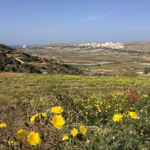 Secco's Seaview Accommodation, Homestays  Mġarr - big - 46