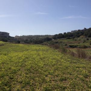 Secco's Seaview Accommodation, Homestays  Mġarr - big - 47
