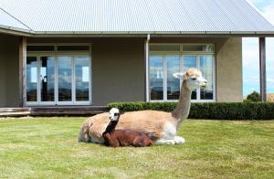 Gallin Farm Alpacas and Farmstay - Accommodation - Masterton