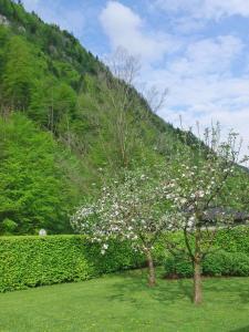 Haus Seehof, Pensionen  Sankt Gilgen - big - 53