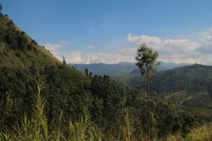 Cool Mount Guest, Privatzimmer  Nuwara Eliya - big - 45