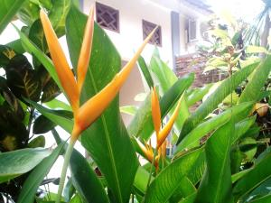 Margo Utomo Hill View Resort, Комплексы для отдыха с коттеджами/бунгало  Kalibaru - big - 46