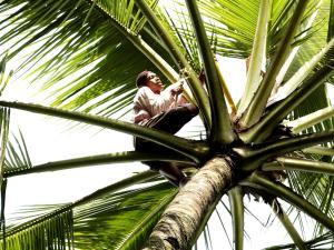 Margo Utomo Eco Resort, Resort  Kalibaru - big - 42