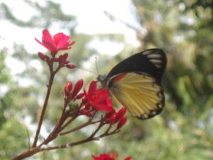 Margo Utomo Eco Resort, Resort  Kalibaru - big - 24