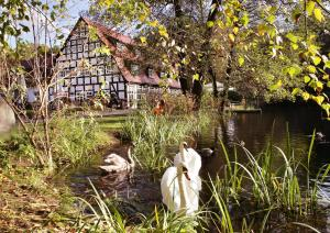 Springbach-Mühle Belzig - Brück